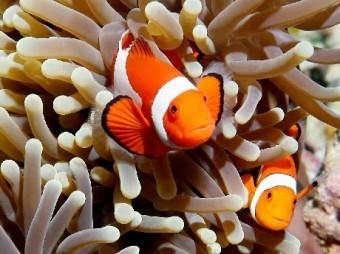 d6d41-anemonandclownfish