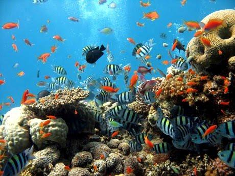 d6f25-scuba-diving