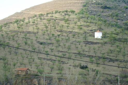 Amendoeiras 163